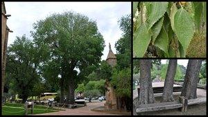 Els lledoners del monestir de les Avellanes