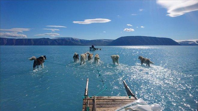 Imagen del Centro para el Océano y el Hielo en el Instituto Meteorológico Danés muestra a los perros de trineo vadeando agua estancada en el hielo marino durante una expedición en el noroeste de Groenlandia.