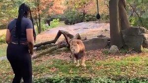 'La mujer que no temía a los leones', Myah Autry, ha sido arrestada en Nueva York.