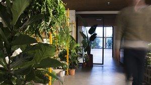 El interiorismo de 8H juega con las luces para realzar la presentación de las plantas expuestas.