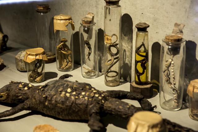 Imatge de Salvadoriana, el gabinet de curiositats de Barcelona, una exposició que pretén difondre la cultura científica de la ciutat.