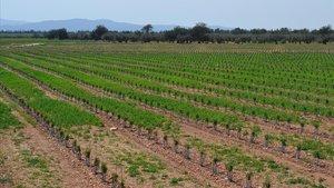 Una de las fincas de Ecolumber en Tortosa, Tarragona.
