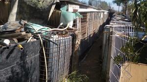 Las precarias instalaciones donde se encontraban los animales, en un huerto en Vilafranca del Penedès.