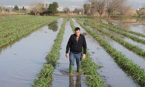 Josep Pañella, en uno de sus campos de calçots anegados, pocos días después del paso de Gloria.