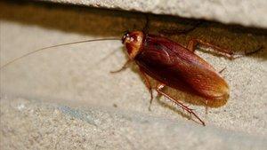 Una cucaracha, en Barcelona.