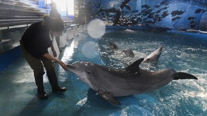 El delfinario del zoo de Barcelona.