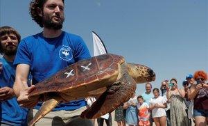 Un operario suelta una tortuga sanada en el Arca del Mar del Oceanogràfic de València, este lunes.