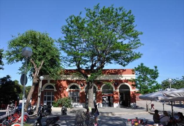 La acacia de la estación de Sant Andreu Comtal