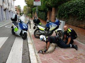Dos policías sujetanal emú que escapó de una casa de San Cugat