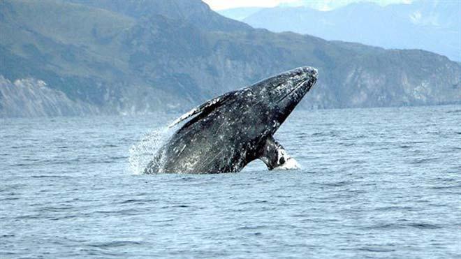 Huesos antiguos revelan dos especies de ballenas perdidas en el Mediterráneo.