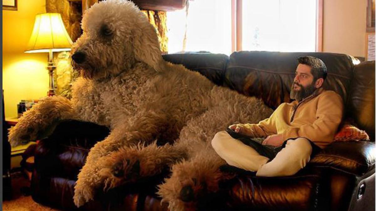 Imagen retocada en la que Juji y Chris Cline ven la televisión en el sofá de su casa.