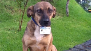 La tierna historia de Terry, Yuli y Negro: de vivir en la calle a ser perros policía