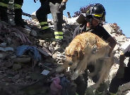 Un perro, rescatado tras pasar nueve días atrapado por el terremoto.