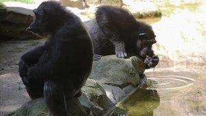 El Zoo de Barcelona reobre però redueix el seu aforament el 50%