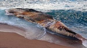 Ballena muerta en la playa de Lloret, este sábado.