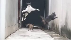 Captura del vídeo en la que un gato escapa de otros tres felinos.