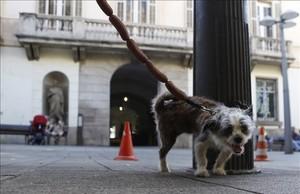 L'Hospitalet prohibeix deixar els animals tancats al balcó durant la nit