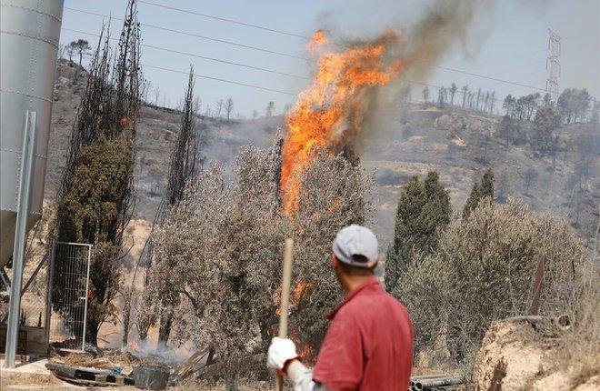 El incendio forestal de la Ribera dEbre (Tarragona).