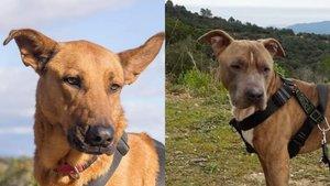 Violin y Tyson, los dos perros sacrificados el pasado diciembre.