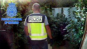 Un agente de la Policía Nacional, en la plantación de marihuana intervenida en Tortosa.