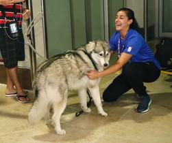 Carolina Marín acaricia a uno de sus dos perros, a la llegada a Barajas.