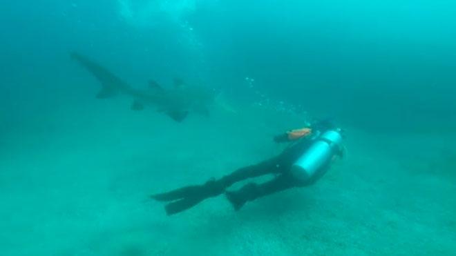 Un submarinista español libera a un tiburón cuando estaba tragándose una bolsa de plástico.