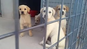 Tres de los cachorros rescatados en Alguaire.