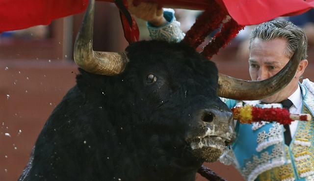 La crueldad en los festejos taurinos, según Igualdad Animal.