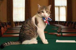 El gat Larry 'eclipsa' per un moment May a Downing Street