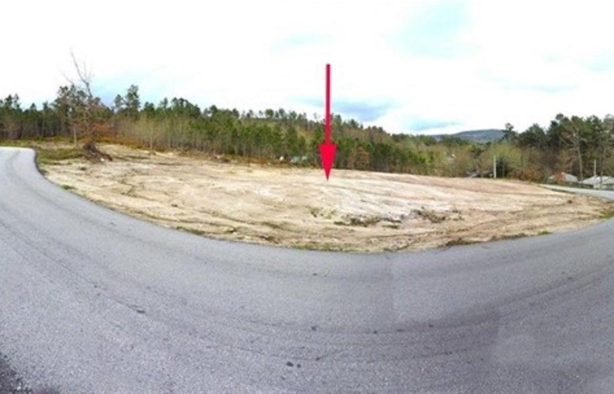 Destrueixen una tomba neolítica a Ourense per a una plantació il·legal de pins