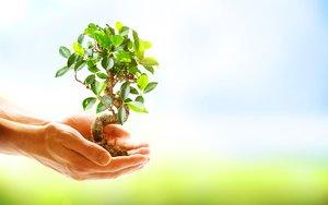 Unas manos sosteniendo una planta.
