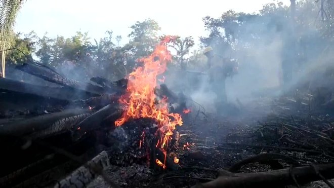 Augmenta un 222% la desforestació a l'Amazònia brasilera