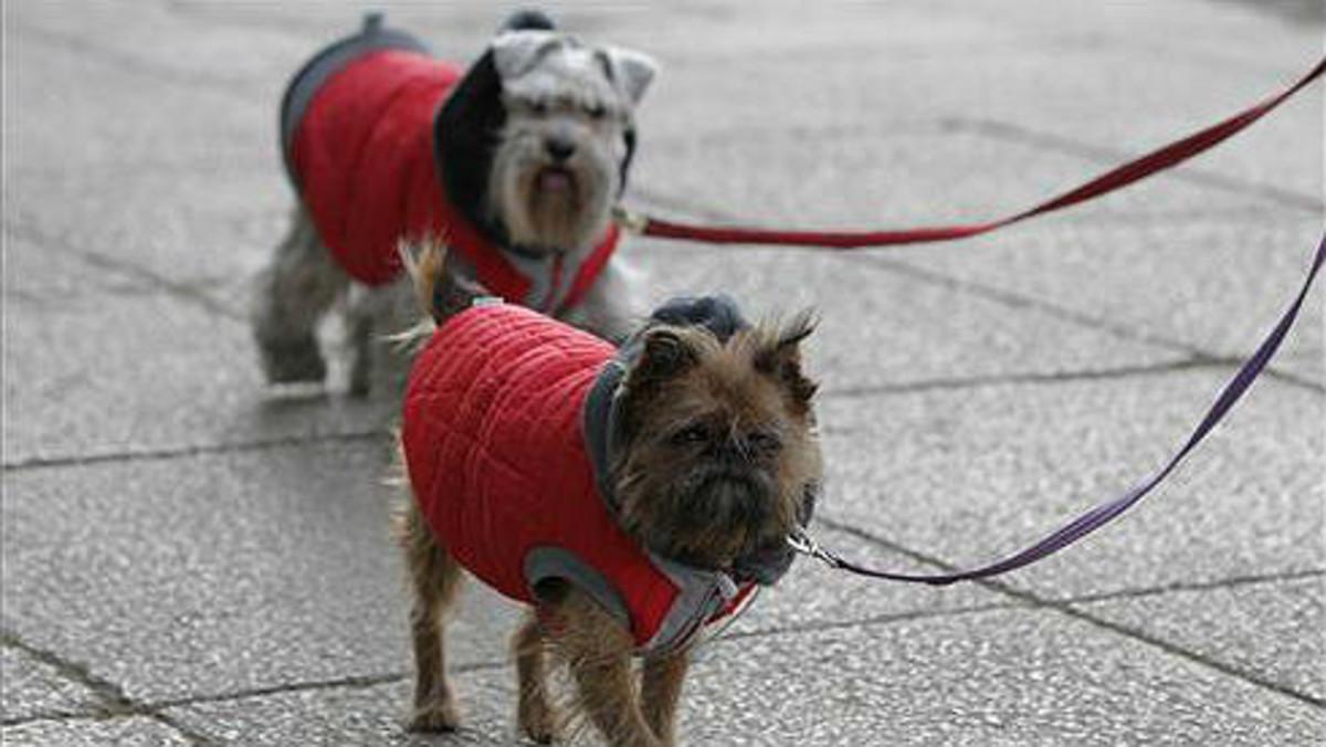 Perros andando por la calle