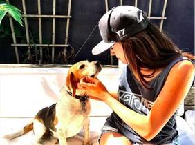 Esta es alguna de las imagenes que quedan en Internet de Guy, el perro adoptado de Meghan Markle.