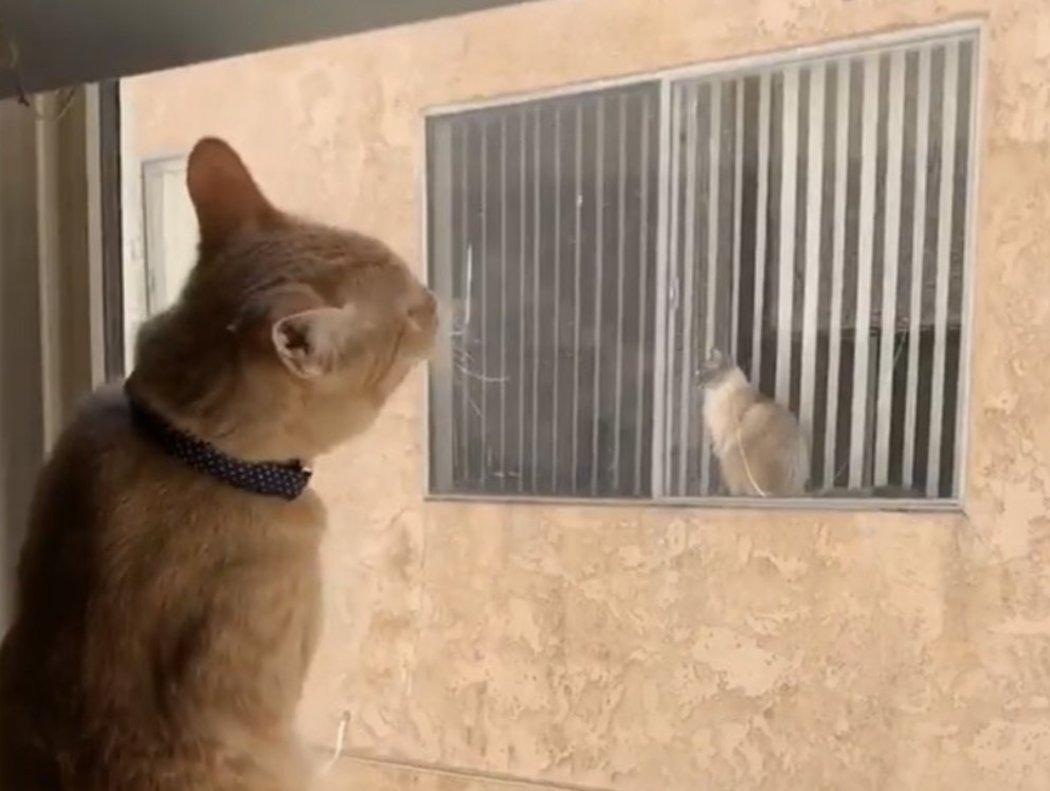 La historia de amor de dos gatos vecinos a través de las redes sociales