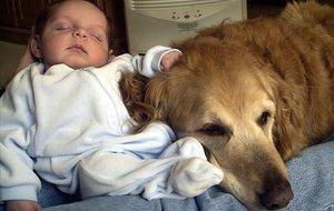 21 de julio: Día mundial del perro