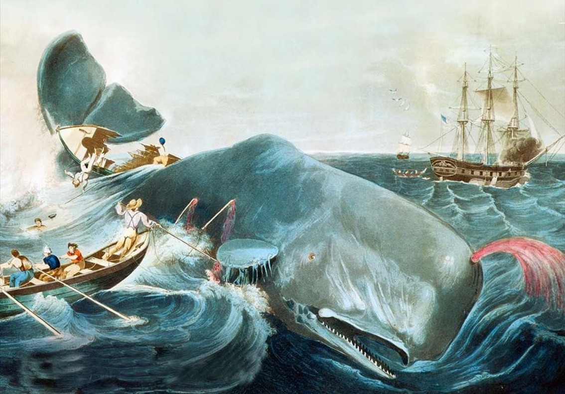 Moby Dick: com domar un monstre (de mil pàgines)