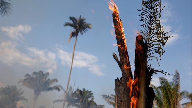 Una onada d'incendis s'estén per l'Amazònia