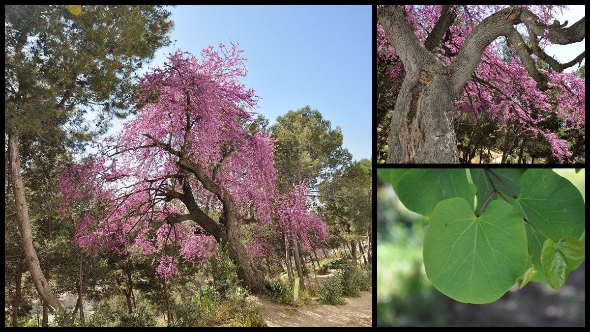El árbol del amor de la calledel Panorama, en Barcelona.