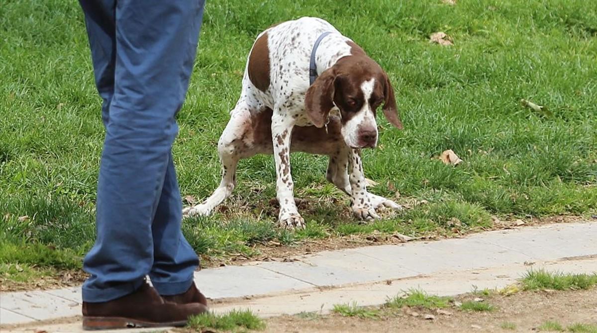 El dueño de un perro espera para recoger la deposición de su animal en un parque.