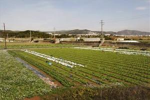 Un cultivo en Gavà.