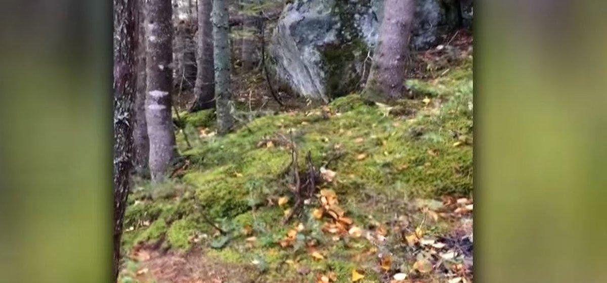 Una captura del vídeo que muestra la respiración de los árboles.