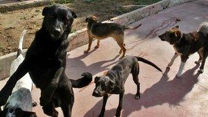 Cent dòlars l'hora per cuidar gossos