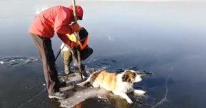 Rescate de un perro atrapado en un lago siberiano.