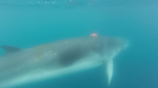 La ballena minke se alimenta como un Pac-man en la Antártida