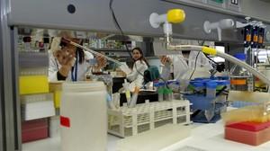 Estudiantes en prácticas en el Parc de Recerca Biomèdia de la Universitat Pompeu Fabra.