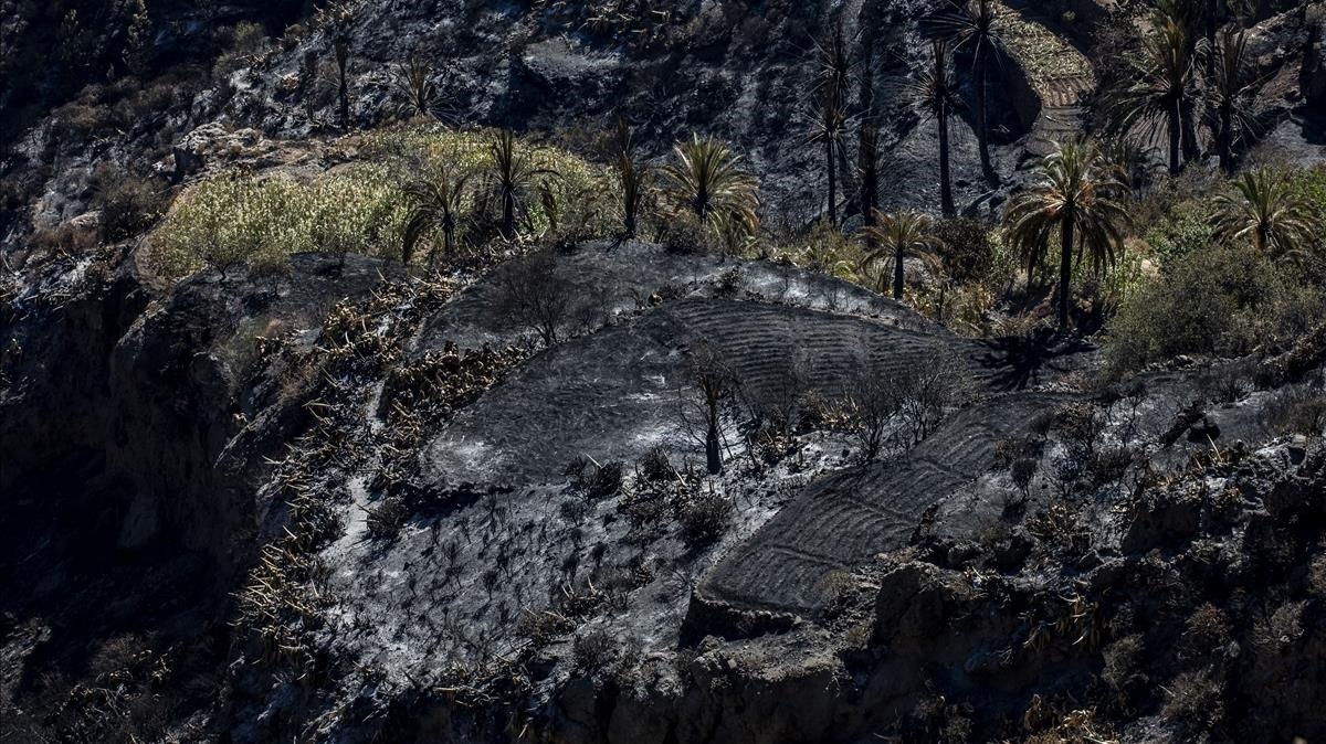 Campos de cultivo de Artenara afectados por el incendio forestal.