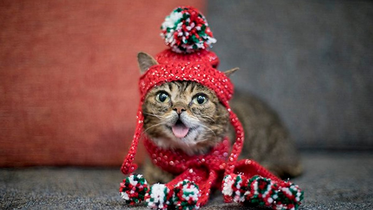 Lil Bub, en una de sus últimas fotografías colgadas en Instagram, vestida con motivos navideños.