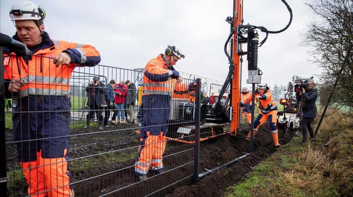 Unos operarios instalan una valla en la localidad danesa de Padborg para delimitar el tránsito de los jabalís procedentes de territorio alemán.
