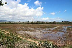 Vista general de uno de los prados del Delta del Llobregat.